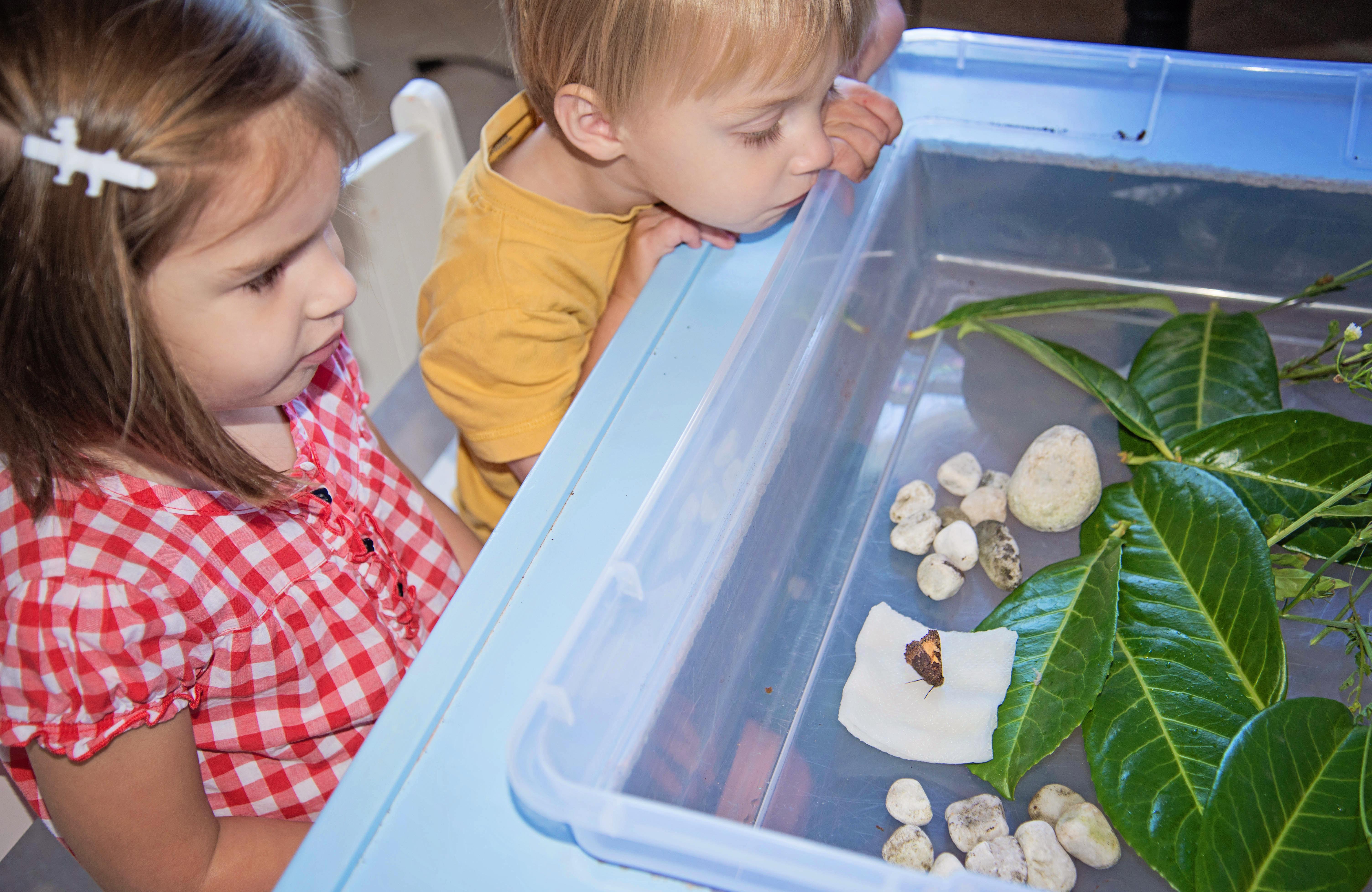 Babes in Deutschland, Building a butterfly habitat