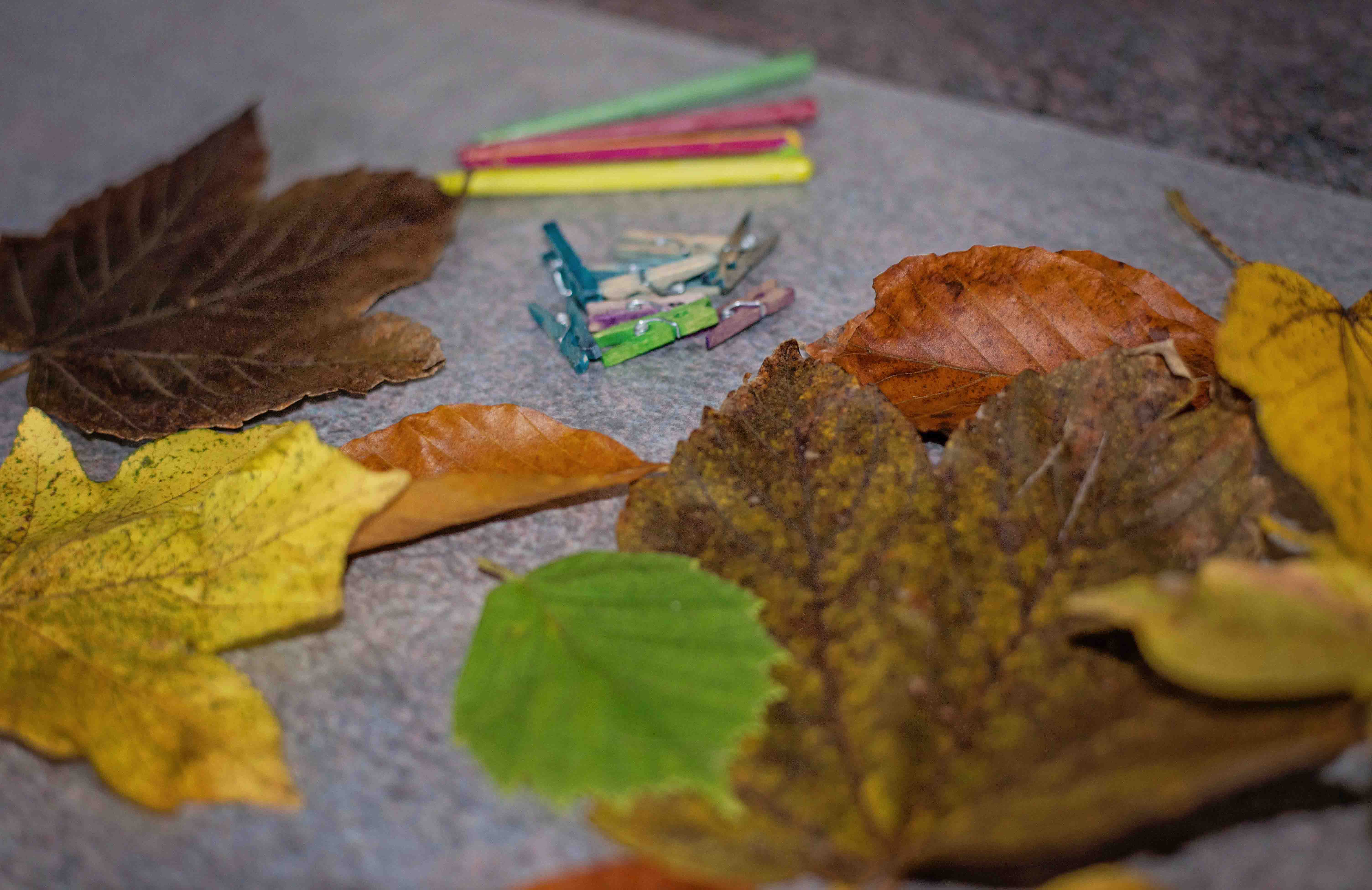 A simple gratitude garland you can make with kids! Leaf rubbings and preserved leaves are the perfect fall craft!