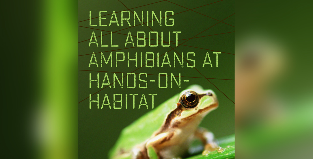 Learning All About Amphibians at Hands-on-Habitat