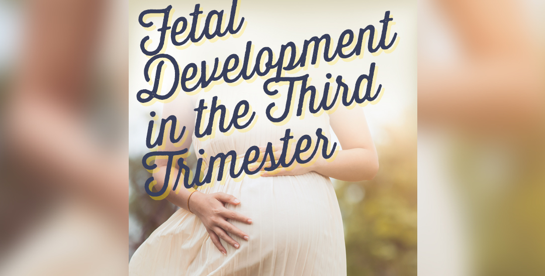 Fetal Development in the Third Trimester