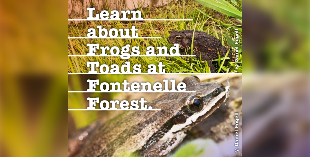 Learn about Frogs and Toads at Fontenelle Forest