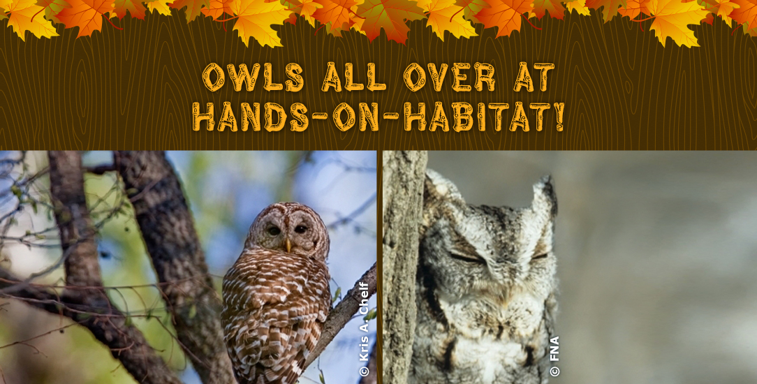 Owls All Over at Hands-on-Habitat!