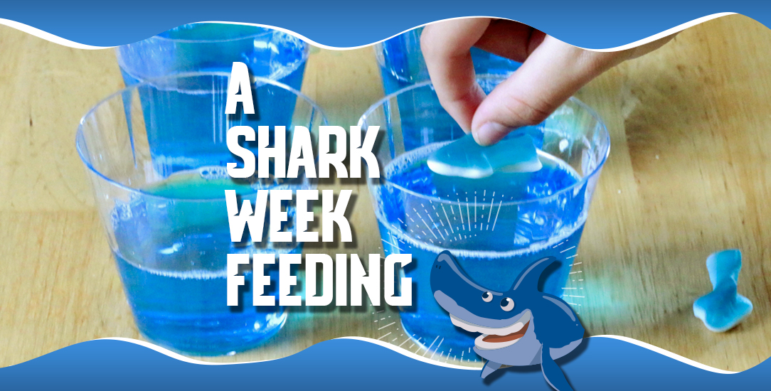 A Shark Week Feeding